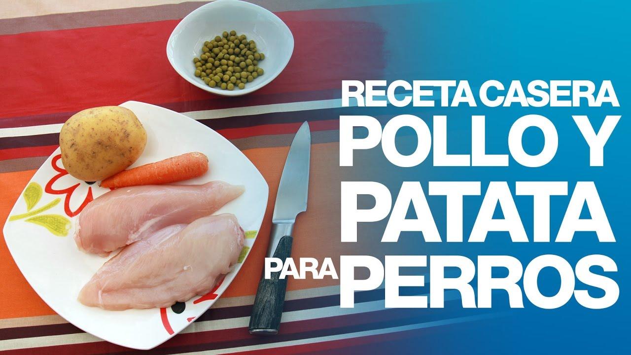 Receta casera de Pollo y patata para perros
