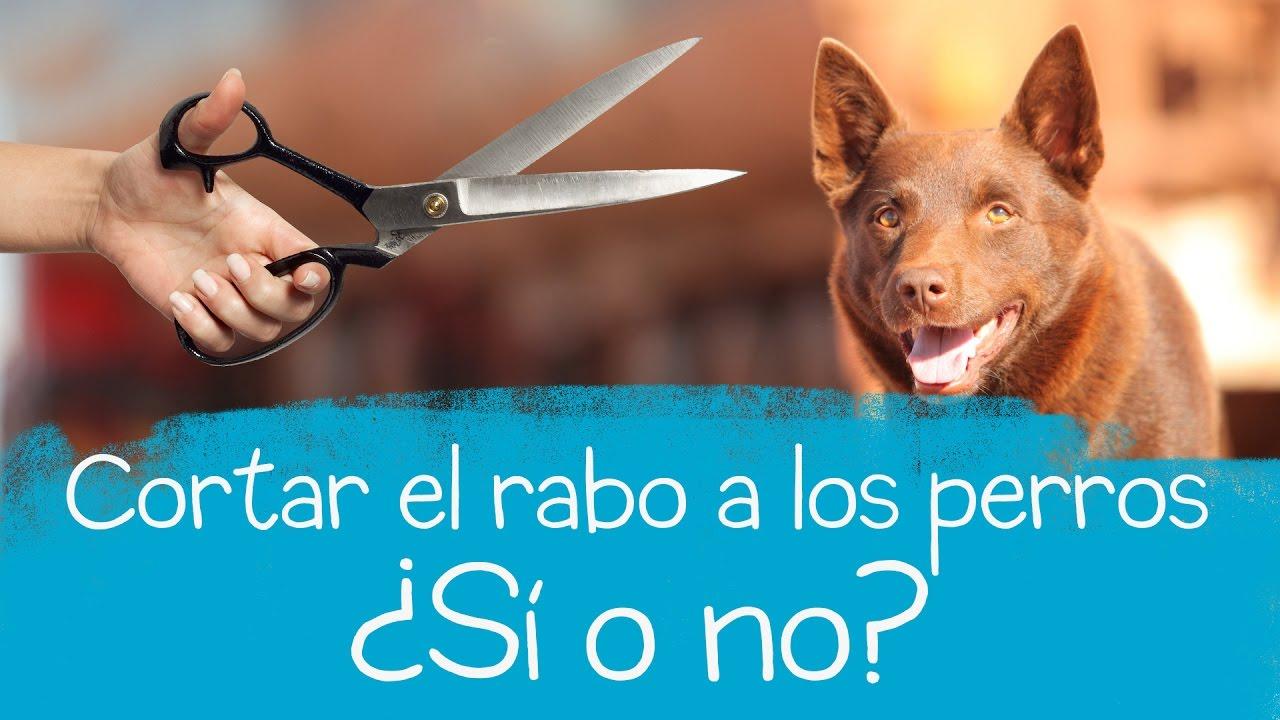 Cortar el rabo a los perros ¿sí o no?